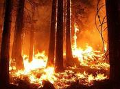 Report Finds Wildfires Hindering California's Climate Commitments Emissions