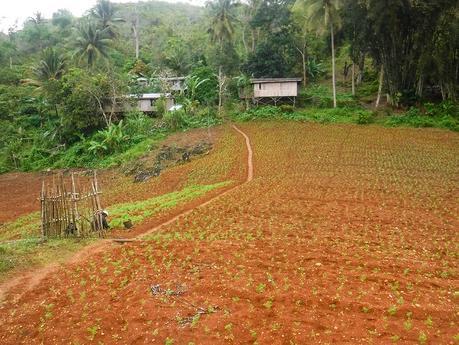 Iron-rich soil