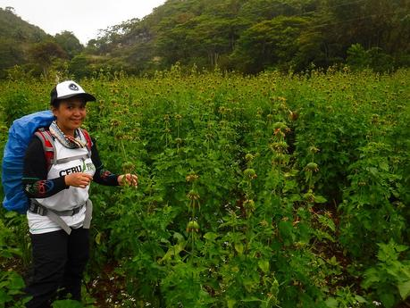 Cebu Highlands Trail Segment 5