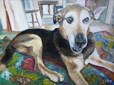 Sweet Dog Portrait: Joey at Home