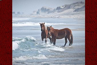 "essays wild mustangs Article: the wild horse, yesterday and today but some of these ""wild"" horses were probably actually this essay was published in may 2008 as part of the."