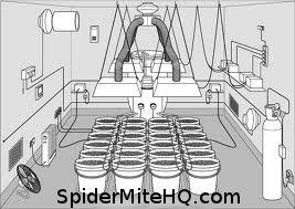 How To Build A Spider Mite Free Closed Grow Environment
