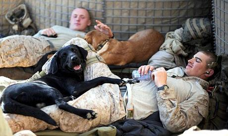 Dogs in Afghanistan Get New Homes With Foreign Soldiers