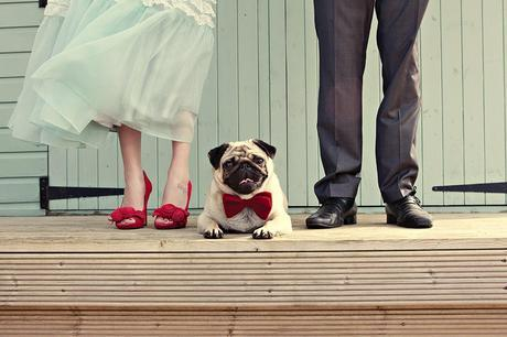 wedding fashions for cats and dogs. www.intimateweddings.com