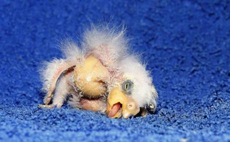 'Germany's Ugliest Parrot' Is The Leipzig Zoo's Newest Animal Celebrity