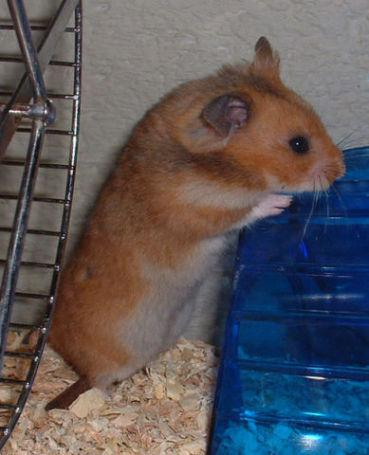 PetSmart Employee Admits To Theft Of Hamsters - Paperblog