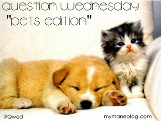 Question Wednesday~Pets~