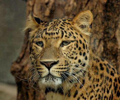 Fate Of Remaining Exotic Animals On Zanesville Farm Still In Question