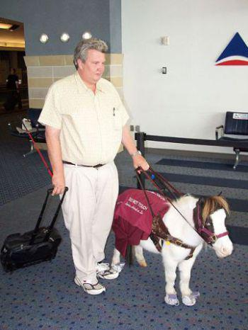 Illinois Considering Allowing Miniature Horses As Service Animals