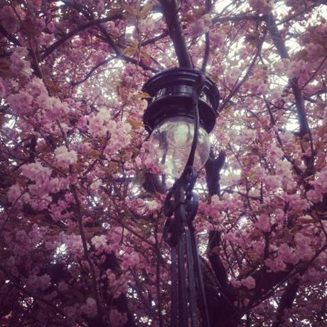 Cherry Blossom, Instagram, Edinburgh