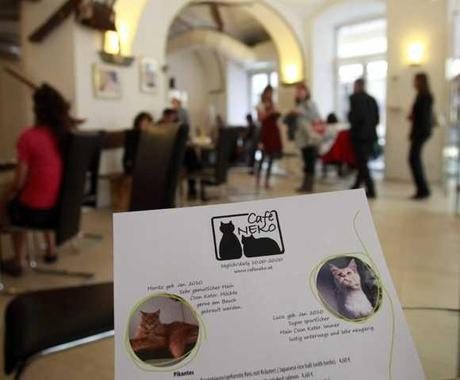 Vienna's First 'Cat Cafe' Offers Service With A Meow