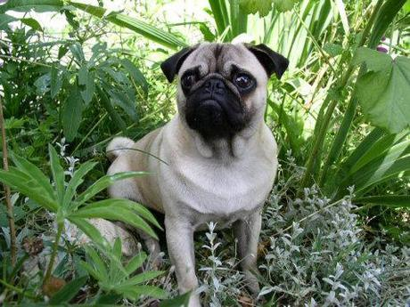 Dogs Abandoned in Cemeteries