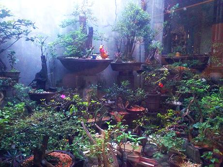Bonsai garden beside