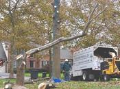 Engaging Services Tree Removal Experts