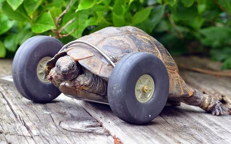 Mrs T gets wheels ......... and blaze started by tortoise