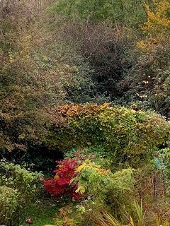 A letter to the garden - November 2019
