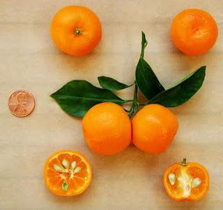 Citrus Info for the Holidays-Calamondins