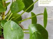 Plants Your Home Healthy Interiors