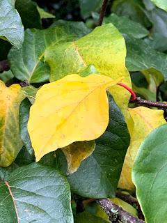 Tree Following November 2019 - Hello Autumn