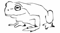Dunham Brook – A Two Minute Meditation