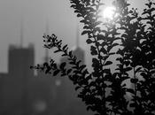 Plants Midtown Silhouette