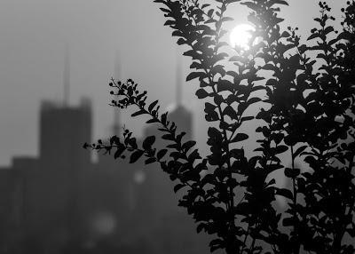 Plants & midtown in silhouette + sun