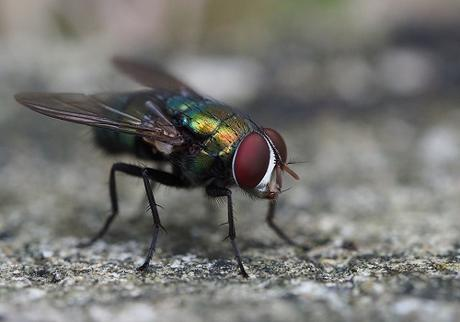Can Pest Control Get Rid of Flies?