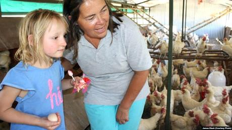 stories about chickens chicken soup for the soul count your before they hatch