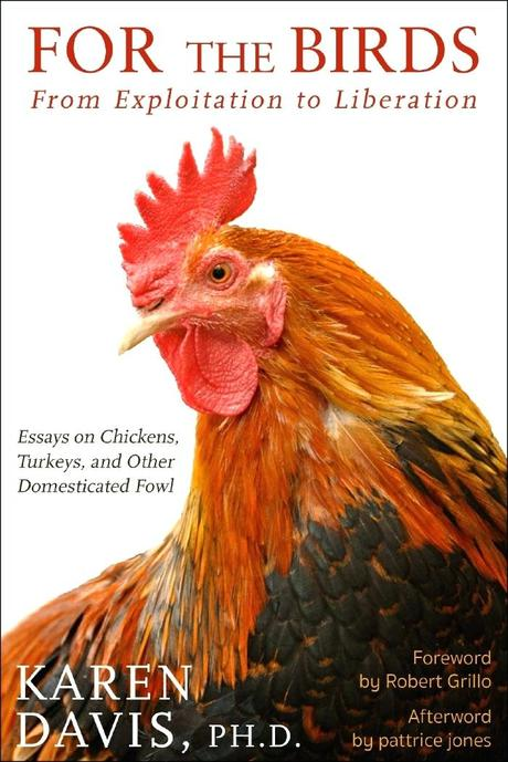stories about chickens submitting for chicken soup books merchandise