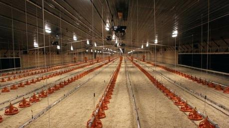 stories about chickens chicken rhodes greece builds supply chain for its 5 rotisserie