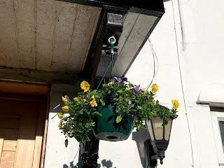 The Hanging Basket