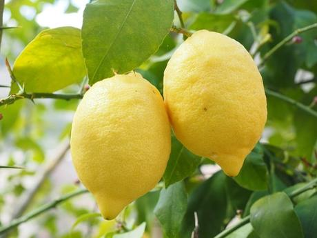 Babies eating lemons are a fun sight! However, despite the many health benefits of this fruit, we need to find out - Can I give my Baby Lemon?