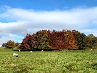 A November walk at the Yorkshire Sculpture Park