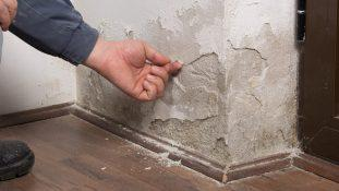 What Are The Common Signs And Causes Of Rising Damp?