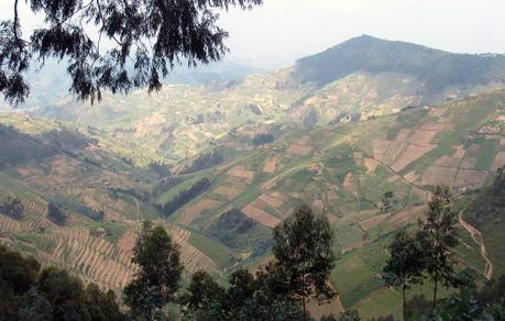 One to watch: Gishwati – Mukura, Rwanda's newest national park