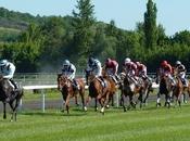 Beginner's Guide Horse Racing