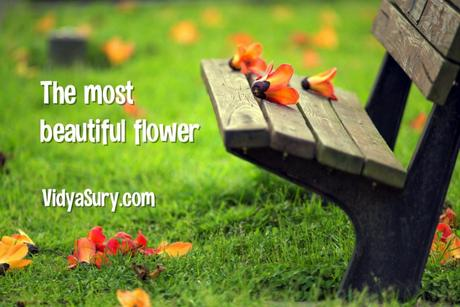 The Most Beautiful Flower – An Inspiring Poem