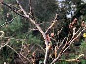 Tree Following December 2019 Last Leaf