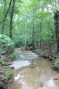 Forest Haiku