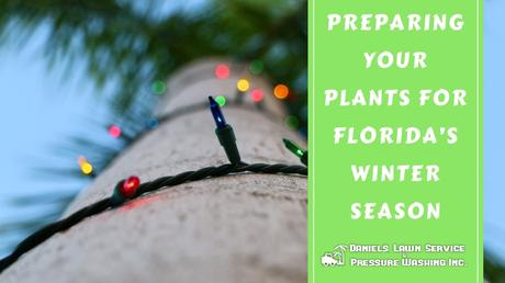 Preparing Your Plants for Florida's Winter Season