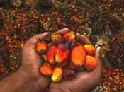 Palm Oil, Just Today Future Too!