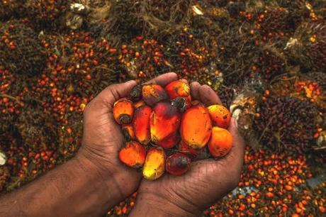 Why I opt for Palm Oil, not just for today but for the future too!