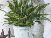 Best Easiest Maintenance Home Plants That Don't Need Much Water
