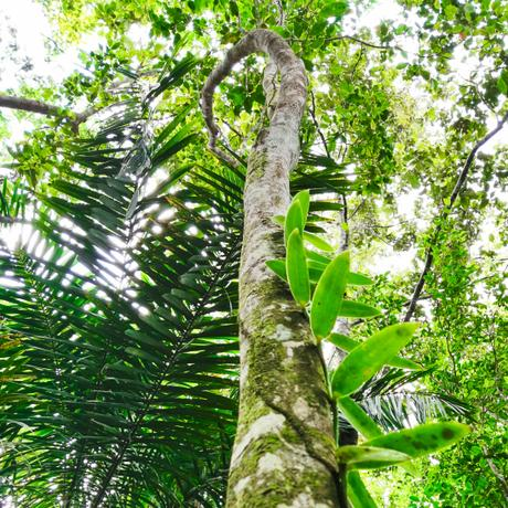 sainte rose tropical jungle artborghi
