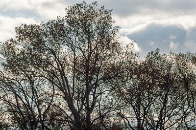 Sky, trees, houses
