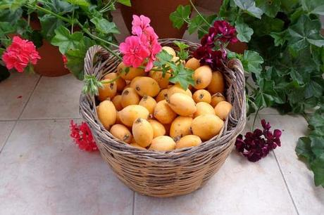 13 Incredible Health Benefits of Loquat Fruit For Skin and Health