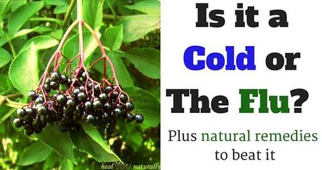 Is it a Cold or The Flu? Find Out Here. Plus The Natural Remedies to Beat Either