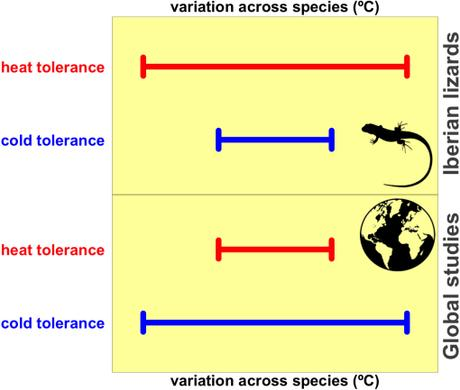 Heat tolerance highly variable among populations and species