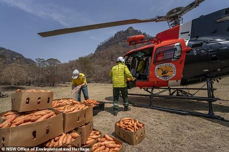 food from the heaven ~ ravaging Australian bushfire