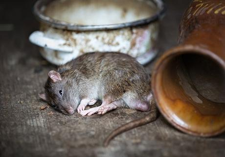 How Pest Control Improves Your Home's Resale Value
